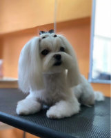 Фото галерея стрижка собак Коготки